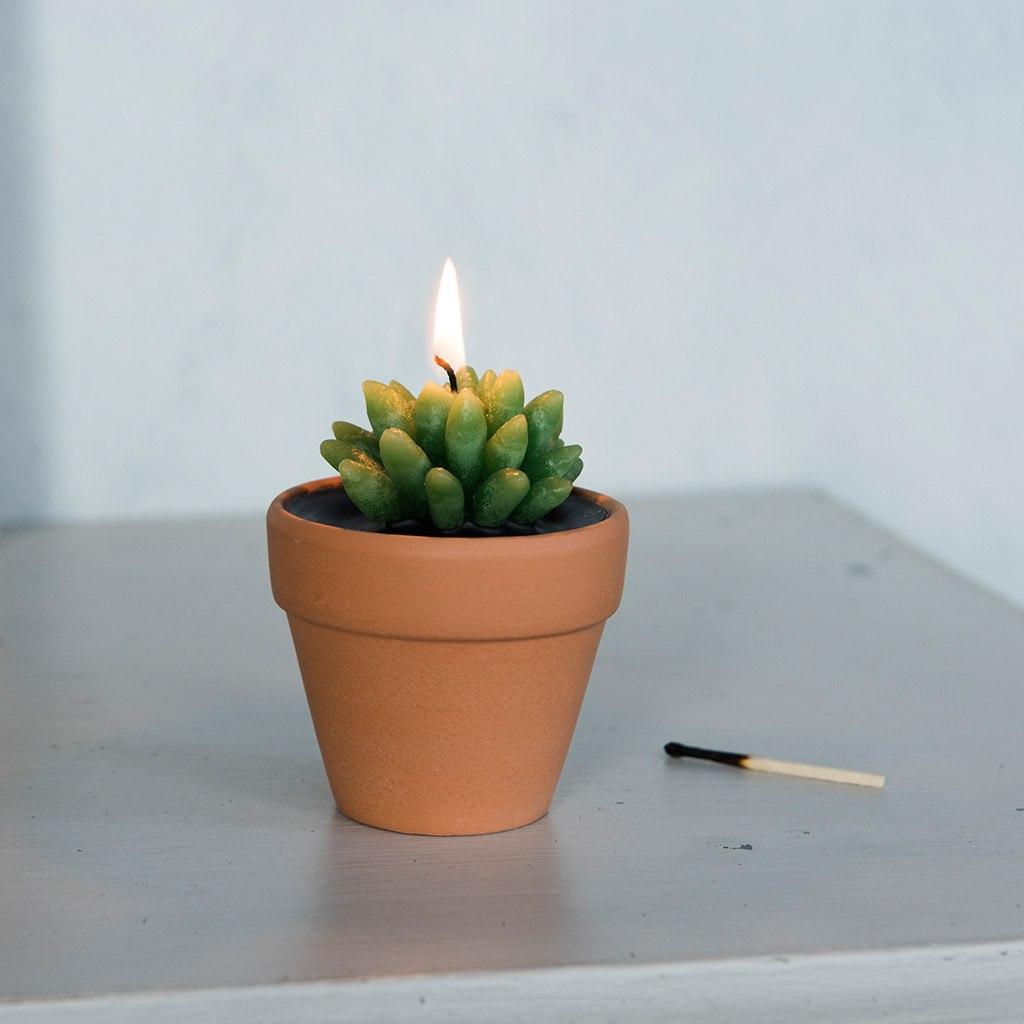 cactus-candle-pot