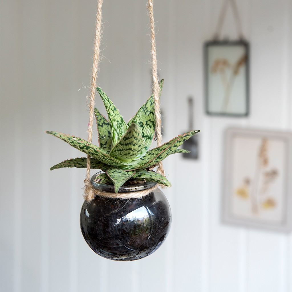 Small hanging glass planter