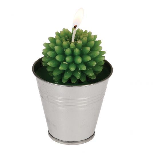 Cactus Candle In Tin