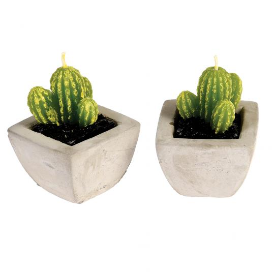Cactus Candles In Cement Pots