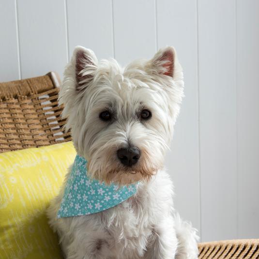Large Blue Floral Print Dog Bandana