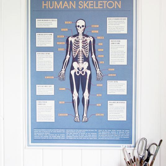 5 Bgen Geschenkpapier Skelett Rex London Ehemals Dotcomgiftshop