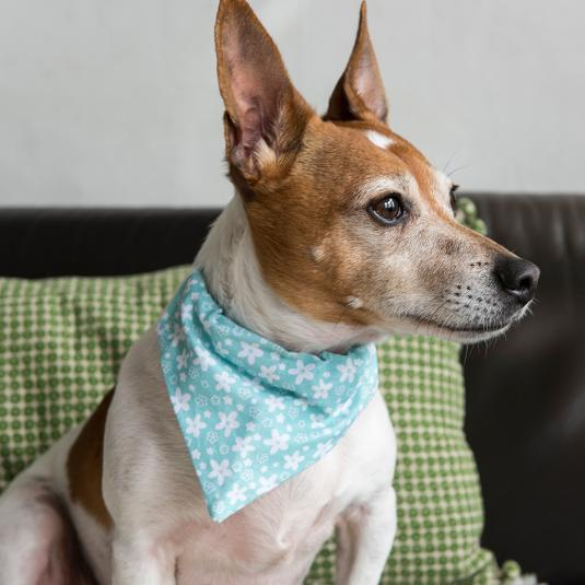 Small Blue Floral Print Dog Bandana