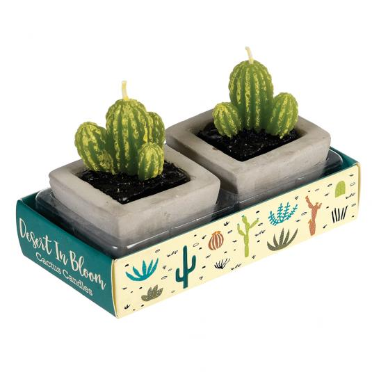 Two Cactus Candles In Cement Pots